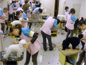 広島サンシャイン グルーミング スクール